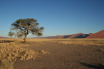 Tree lost in the Namib